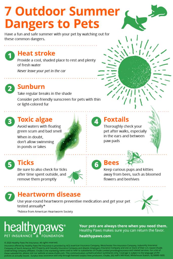 Seven Summer Seasonal Dangers to Pets.