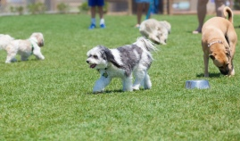 dogs at a park