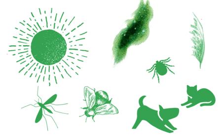 Summer dangers to pets
