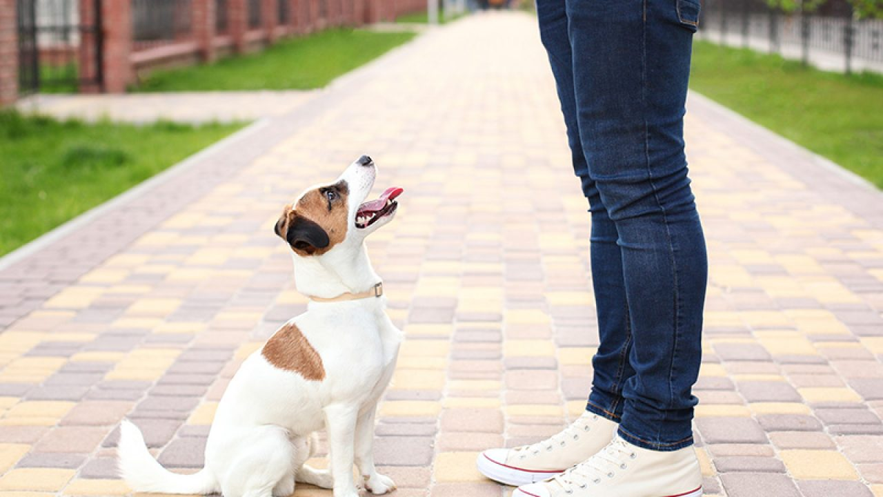 Adopting A Rescued Dog Know The Signs Of Trauma Healthy Paws Pet Insurance