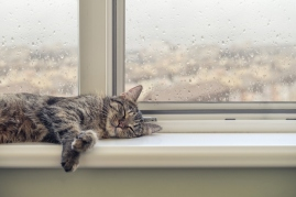 cat sleeping on window sill