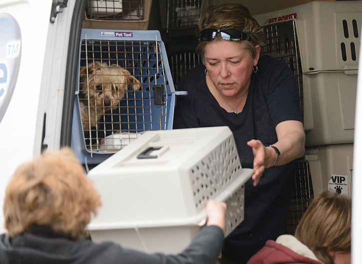 Unloading rescued dogs