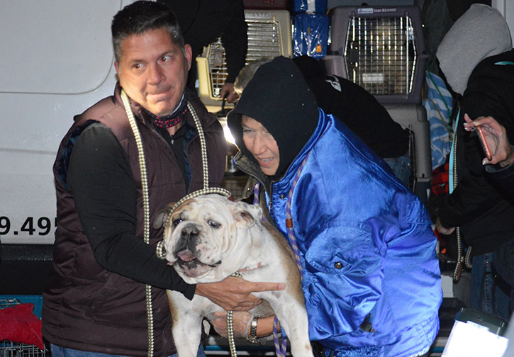 People rescuing a bulldog