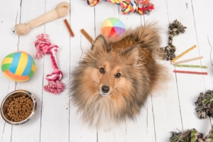 dog with toys and bones