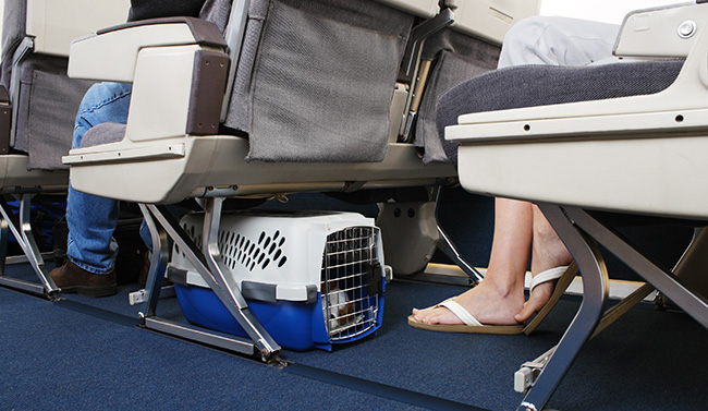 Dog in a crate inside a plane
