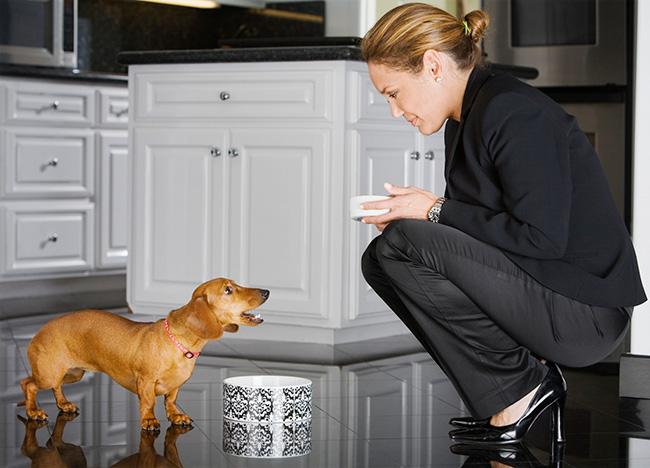 Food related barking