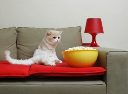 cat on couch with bowl of popcorn