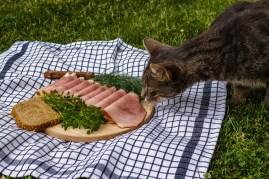 cat sniffing ham