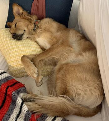 Cute dog named Darby