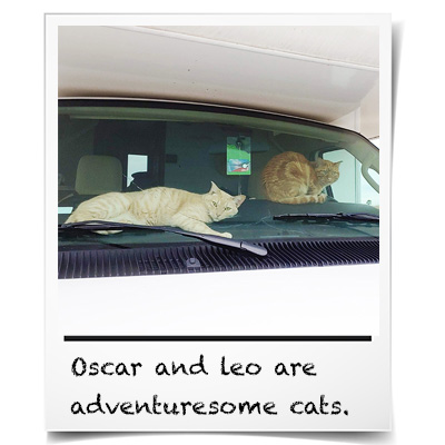 Cats in an RV