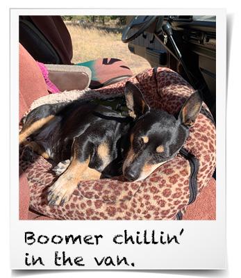 Boomer dog in van