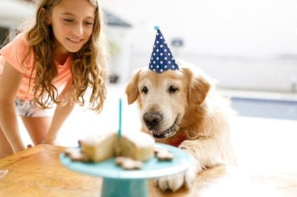 girl and dog celebrating birthday