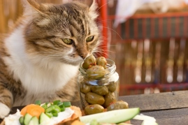 cat sniffing jar of olives