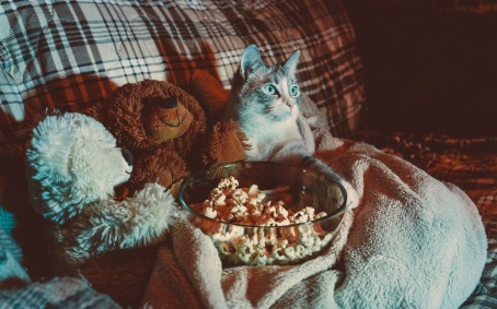 cat watching tv at night