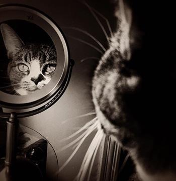 Fern admiring her reflection