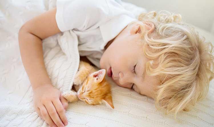 Sleeping child and kitten