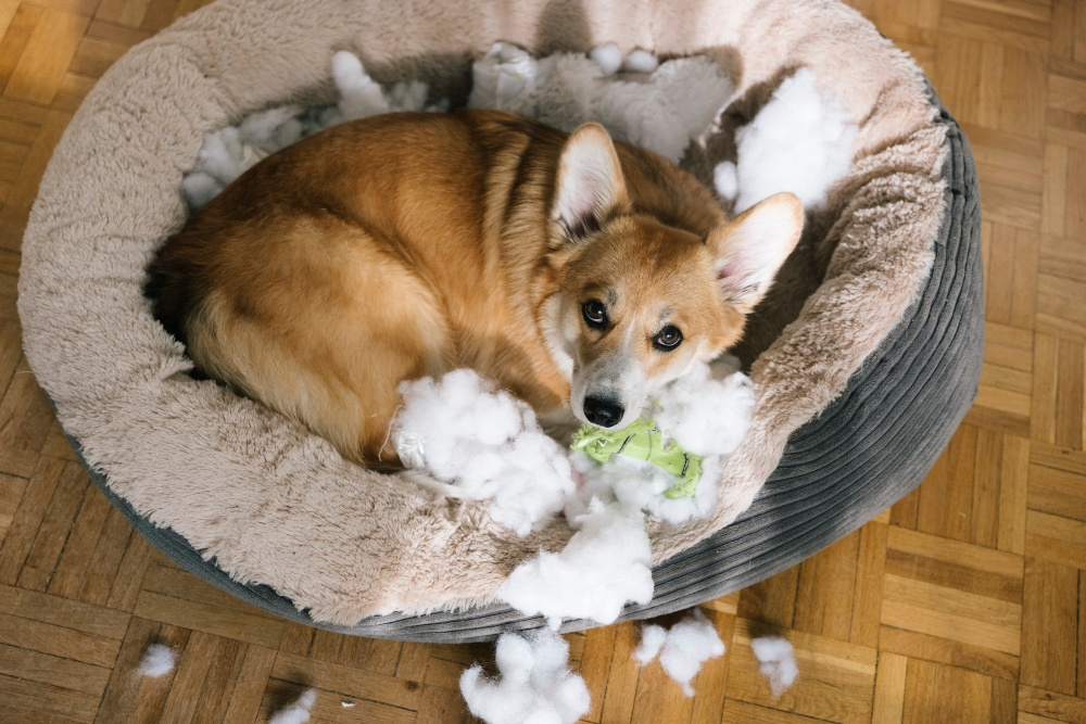 dog with destroyed toy