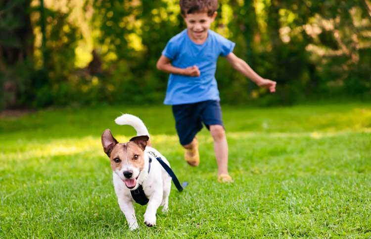 Kid and dog playing