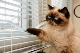 lonely cat looking out window