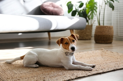 dog on floor next to couch