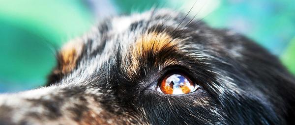 julie-austin-pet-photography-1