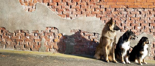 julie-austin-pet-photography-2