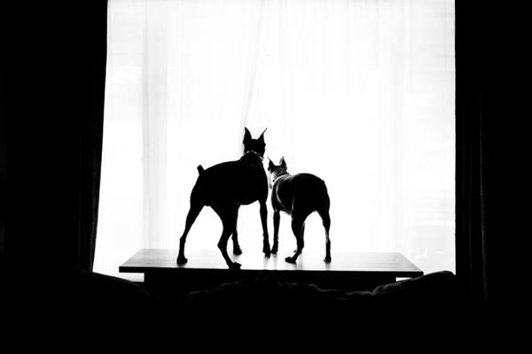 erin-vey-pet-photography-2