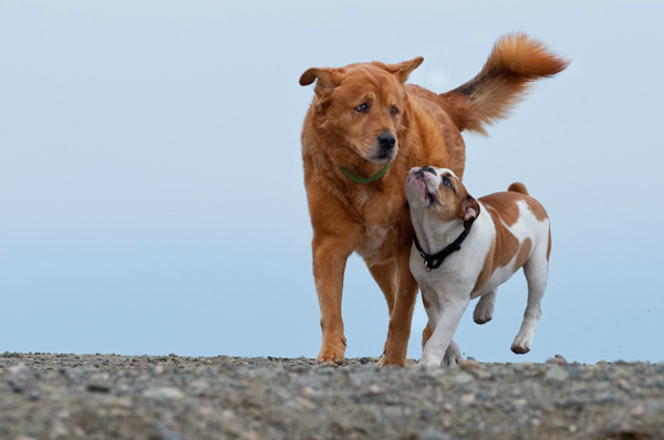 nw-dog-shots-pet-photography-1