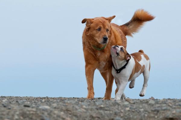 nw-dog-shots-pet-photography-1