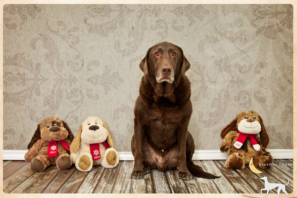 stardog-pet-photography-1