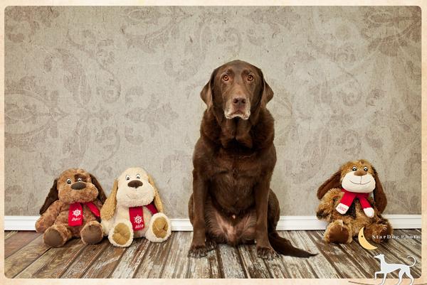 stardog-pet-photography-1