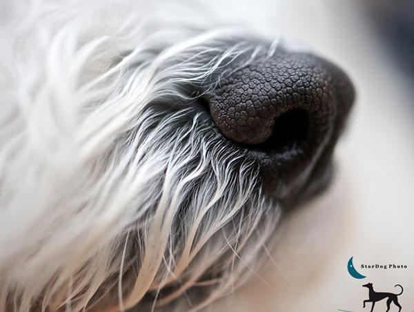stardog-pet-photography-2
