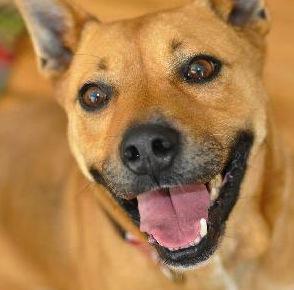 Dog Behavior Rehab Reviews