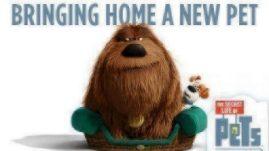 Bringing-Home-a-New-Pet