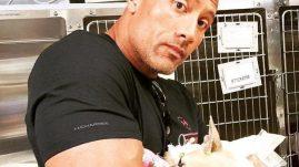 Dwayne Johnson dog