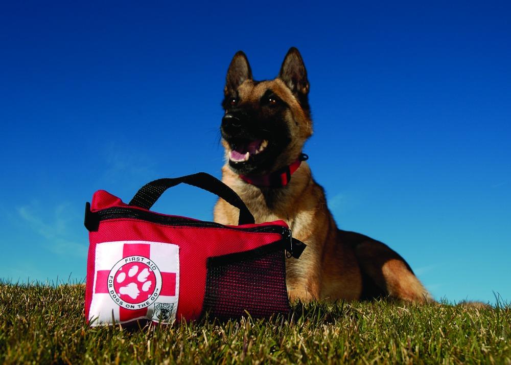 Dog first aid, pet first aid kit