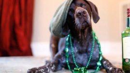 dog St Patrick's Day