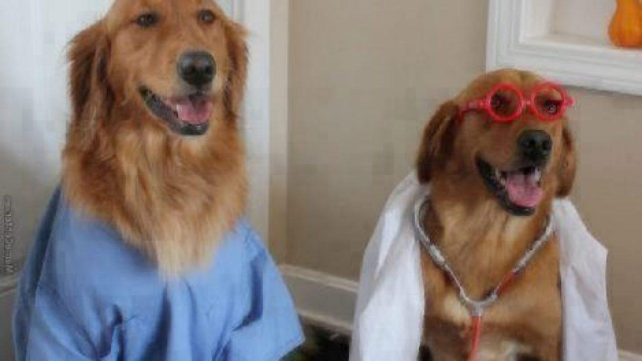 Resultado de imagem para dogs doctors