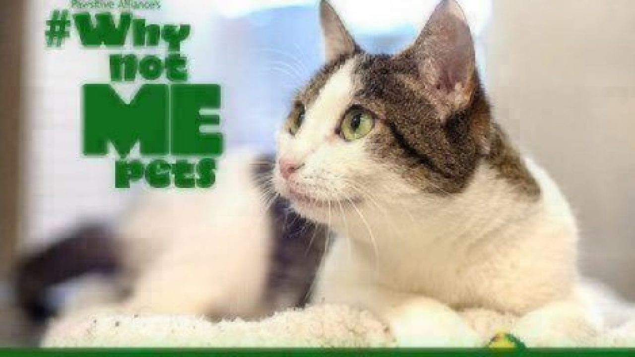 Why Not Me? Meet Kitkat! | Healthy Paws Pet Insurance