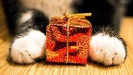 animal shelters Christmas