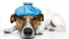 veterinary telemedicine,Google Helpouts