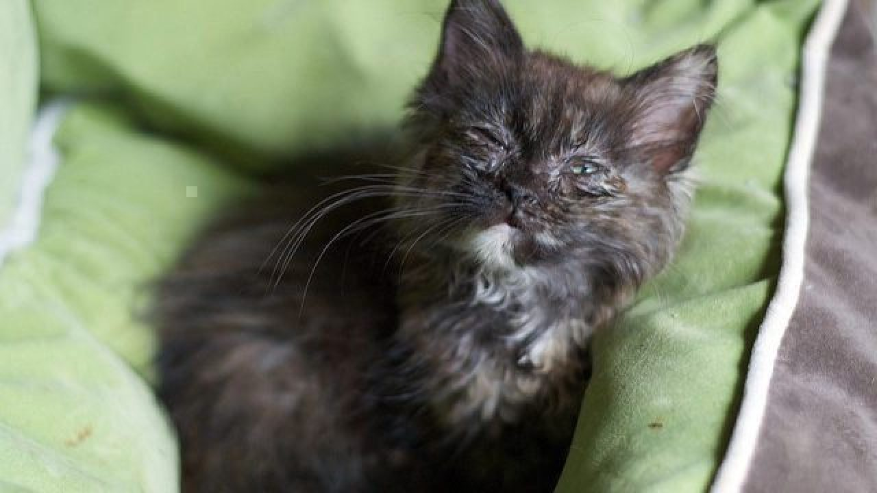 6 Secret Signs Of A Sick Cat Healthy Paws