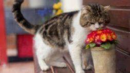 allergies in cats