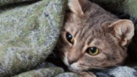 pet cancer awareness month November