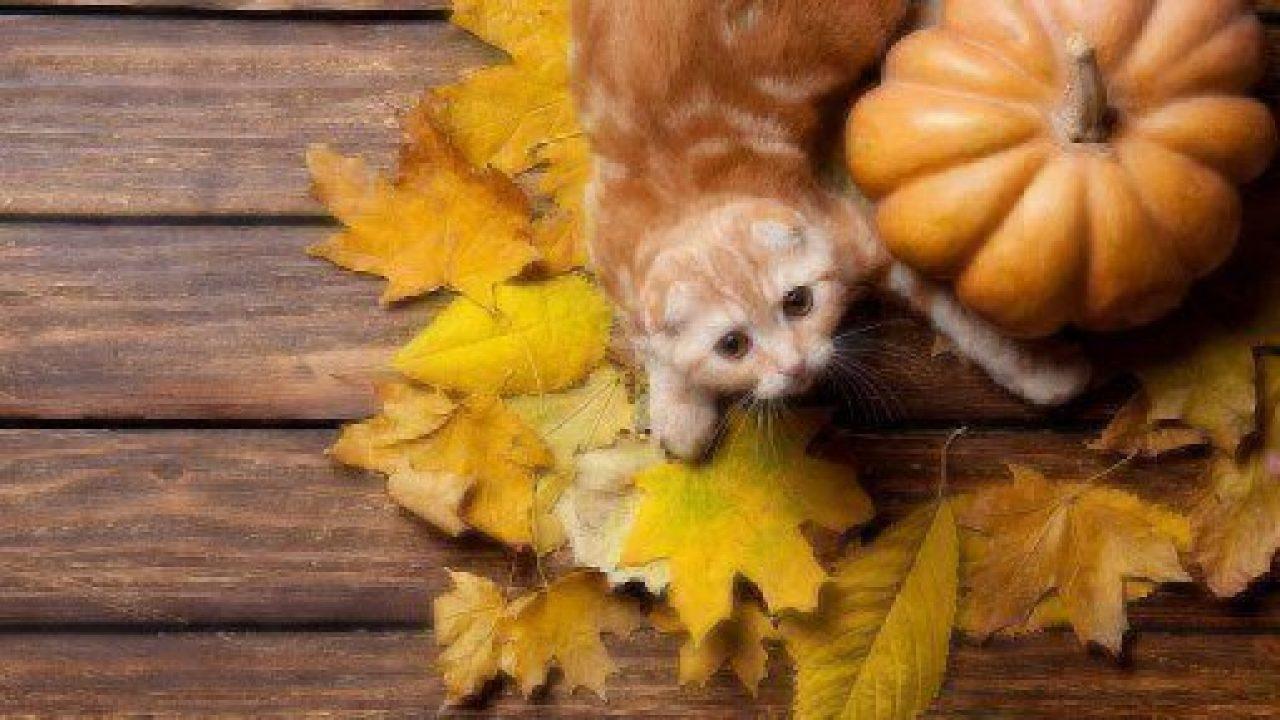 can dog cat eat pumpkin