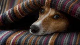 head pain dog