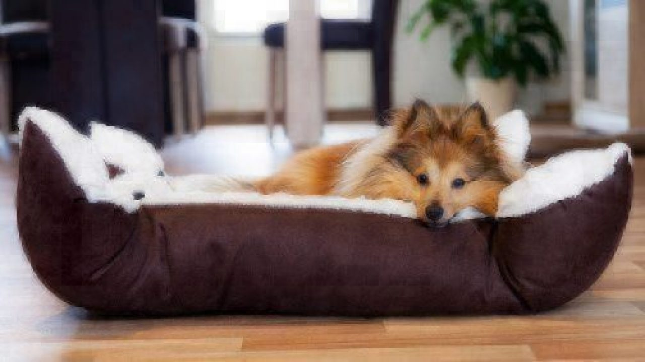 The Best Dog Beds for 2018 | Healthy Paws Pet Insurance