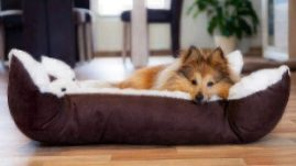healthy paws dog beds