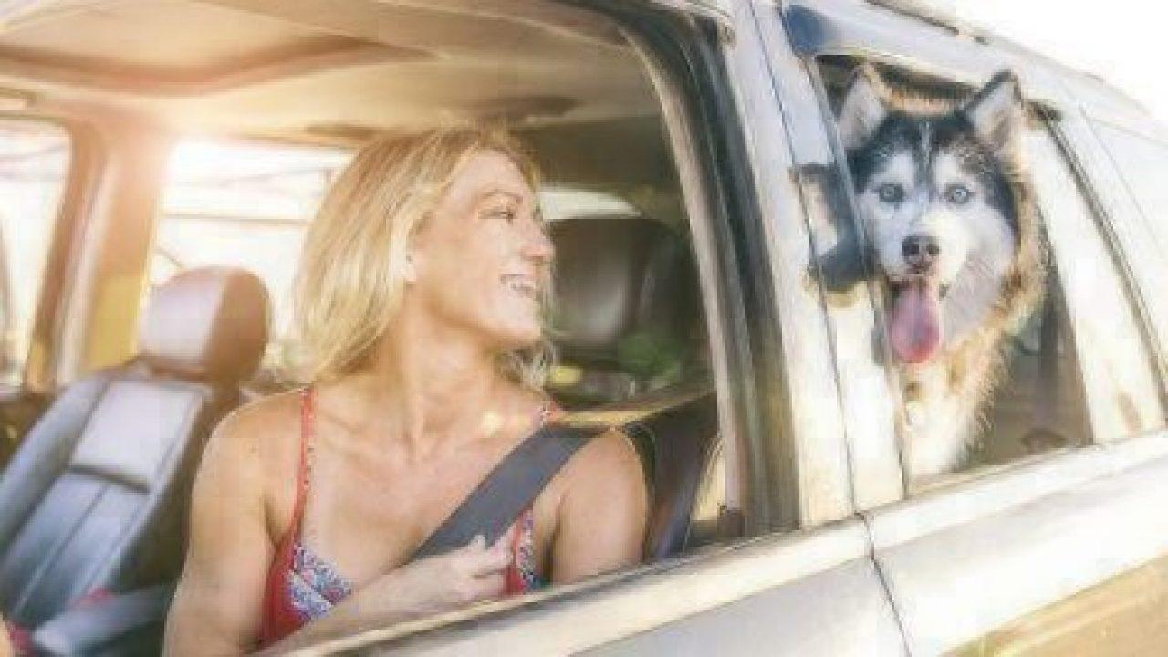 dog safety in car