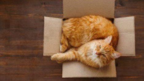 kidney disease in cats